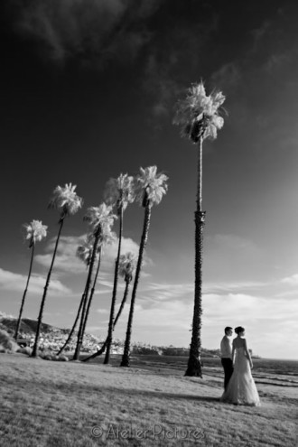 Palm trees glow white with infrared wedding photography at the Scripps Seaside Forum