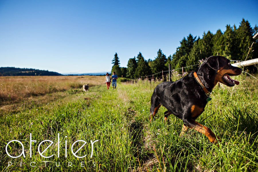 The dog leads the way for the engagement photos