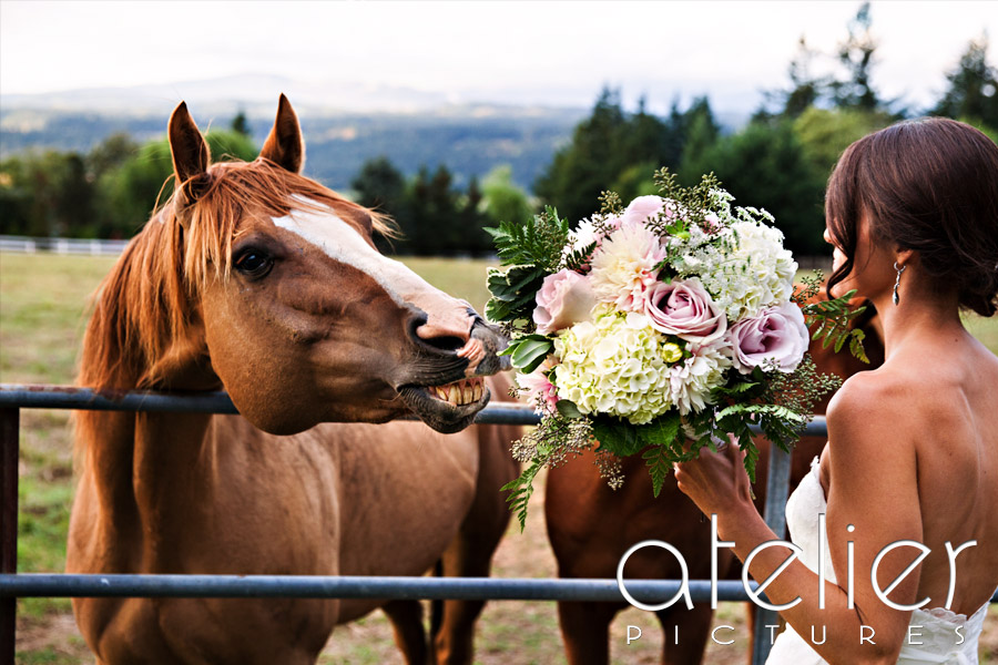 The horse tries to eat the bridal bouquet