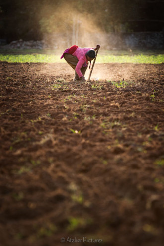 Working the fields in preparation for the monsoon season.